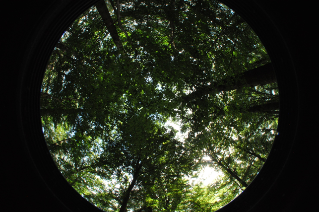 Hemispherical picture of a biodiverse forest south of Ghent, Belgium. Such pictures can be used to estimate the canopy density or leaf surface area or a forest stand, which can be related to important processes such as the buffering of heatwaves or the pollution-filtering capacity of a given stand.